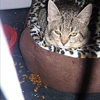 Adopt A Pet :: Feather - Lancaster, CA