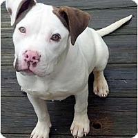 Adopt A Pet :: Addy - Killen, AL