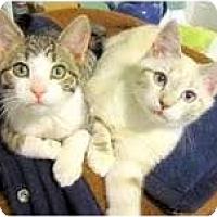 Adopt A Pet :: Parker & Izzy - Arlington, VA