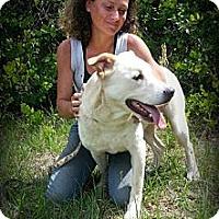 Adopt A Pet :: Jasper - Eustis, FL