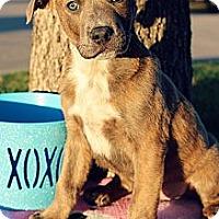 Adopt A Pet :: Zappa - Justin, TX