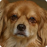 Adopt A Pet :: Mr. Tibbs - Cantonment, FL