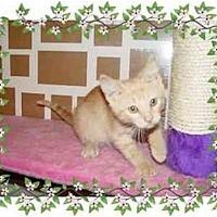 Adopt A Pet :: Sunny - KANSAS, MO