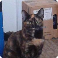 Adopt A Pet :: Sapphire - Colmar, PA