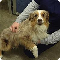 Adopt A Pet :: Tucker - Elk River, MN