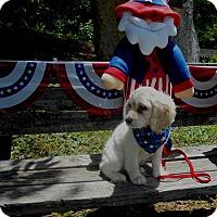 Adopt A Pet :: Brandon -Adopted! - Kannapolis, NC