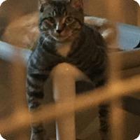 Adopt A Pet :: Deklan - Geneseo, IL