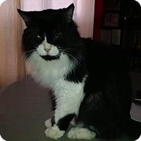 Adopt A Pet :: Rupert - Toronto, ON