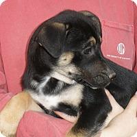 Adopt A Pet :: LIVIA - friendly & beautiful - Chicago, IL