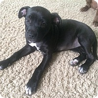 Adopt A Pet :: Zena - Grand Rapids, MI