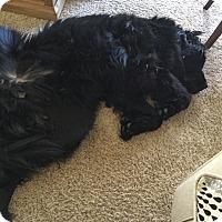 Adopt A Pet :: Apollo - Silverthorne, CO