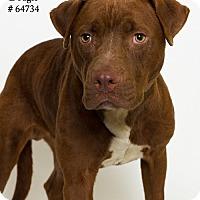 Adopt A Pet :: Dougie  (Foster) - Baton Rouge, LA