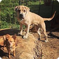 Adopt A Pet :: Winnie - Berea, OH