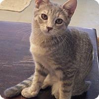 Adopt A Pet :: Renoir - Quail Valley, CA
