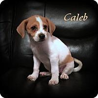 Adopt A Pet :: Caleb - Denver, NC