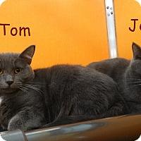 Adopt A Pet :: Tom & Jerry - Elyria, OH