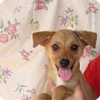 Adopt A Pet :: Minnie - Oviedo, FL