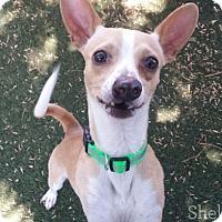 Adopt A Pet :: Topper - Meridian, ID