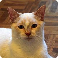Adopt A Pet :: Kai - Greeley, CO
