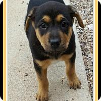 Adopt A Pet :: Wilma - Tombstone, AZ