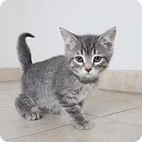 Adopt A Pet :: Aurora C160326 - Edina, MN