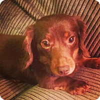 Adopt A Pet :: Ron - Alden, NY