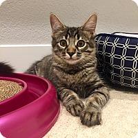 Adopt A Pet :: Olive Ryan $25 TO ADOPT - San Jose, CA