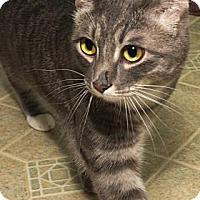 Adopt A Pet :: Simba - Fort Collins, CO