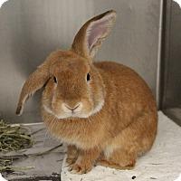 Adopt A Pet :: *TIPSY - Las Vegas, NV