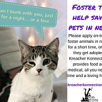 Adopt A Pet :: Foster Homes Needed - Flushing, MI