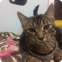 Adopt A Pet :: Terry - Chicago, IL