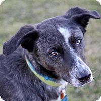 Adopt A Pet :: Meeko - Liberty Center, OH