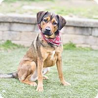 Adopt A Pet :: Brick - Greensboro, NC
