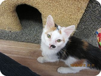 Calico Kitten for adoption in Bunnell, Florida - Pretty Girl