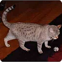 Adopt A Pet :: Suki - Redwood City, CA