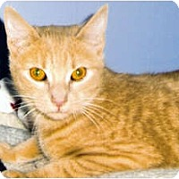 Adopt A Pet :: Cinnamon - Medway, MA