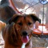 Adopt A Pet :: Skudder   #I - Graceville, FL