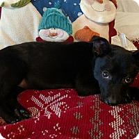 Adopt A Pet :: Cara - Homewood, AL