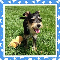 Adopt A Pet :: Reese-ADOPTION PENDING - Sharonville, OH