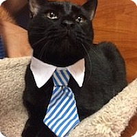 Adopt A Pet :: Chip - Long Beach, NY