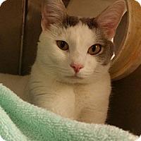 Adopt A Pet :: Sebastian - Athens, GA