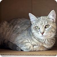 Adopt A Pet :: Abby - Carencro, LA
