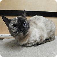 Adopt A Pet :: Vienna - Riverside, CA