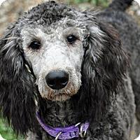 Adopt A Pet :: Mmiri - Pleasant Plain, OH
