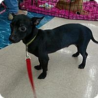 Adopt A Pet :: PICKLES - Rancho Cucamonga, CA