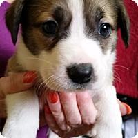 Adopt A Pet :: Mabel - Cincinnati, OH