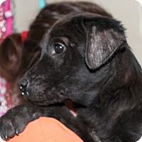 Adopt A Pet :: Sean - Harmony, Glocester, RI