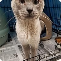Adopt A Pet :: Beauregard - Glen Mills, PA