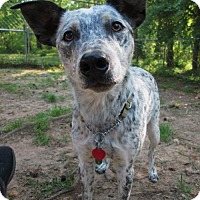 Adopt A Pet :: Otto - Lincolndale, NY