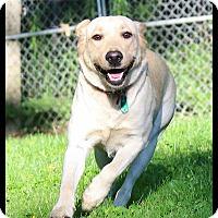 Adopt A Pet :: Takoda - Shippenville, PA